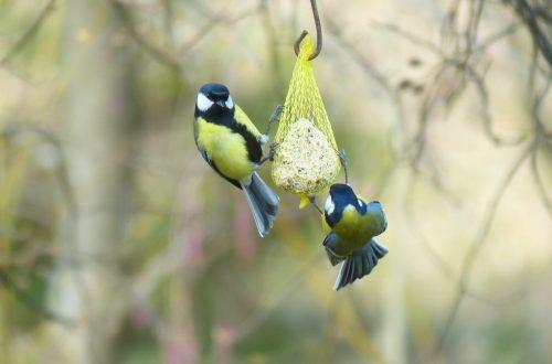 Vögel füttern im Garten: Frühling, Sommer, Herbst und Winter