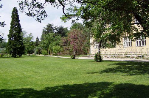 Rasen richtig anlegen: säen, düngen, mähen und vertikutieren