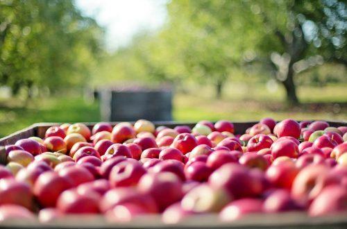 Alte Apfelsorten für Allergiker: die Inhaltsstoffe des Apfels